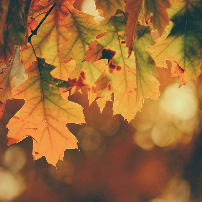 autumn-kitchen-moodboard